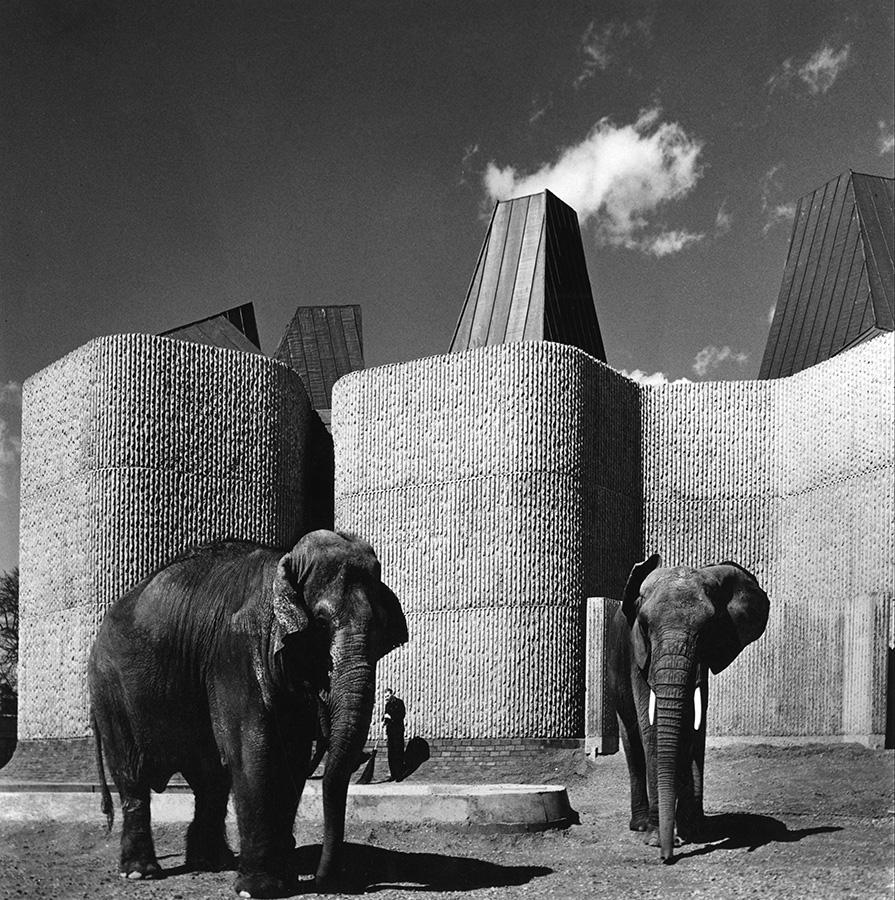 Elephant & Rhino House, London Zoo (via RIBA)