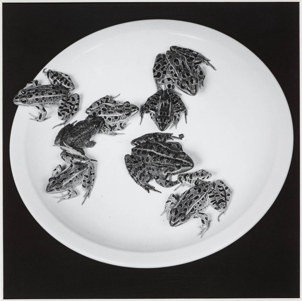 Frogs, 1984 - Robert Mapplethorpe